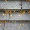落ち葉もきれいです