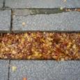 どっさりの落ち葉も