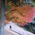 ココの紅葉が一番美しかったです